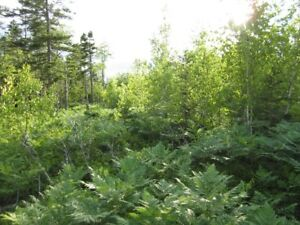 100 acres, can break it up into smaller lots for reduced price
