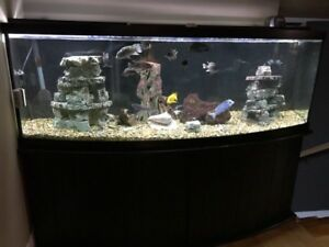 160 Gallon Bowfront Cichlid Tank Excellent condition