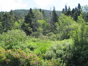155-161 COUNTRY PATH ROAD - LONG POND, CBS