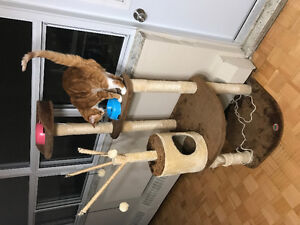 Two Cats and Their Things for Free