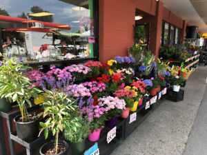 Flower Produce Store (Business for sale) $200000