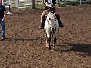 Very Nice Family Horse 17 years old Siver Apy.