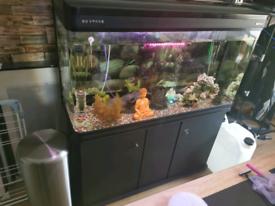BOYU – LZ-1200 Luxury Aquarium (294 Liters) Big bundle + fish's
