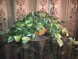 2 fake plants and hanging pictures for sale