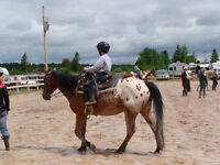 AQHA and ApHCC horses for sale