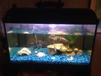 Aquarium 20gallons tout inclus