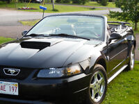 2004 Mustang Convertible for sale