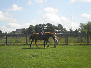 Hands-On Everything Horse Learning (starts kids 4+yrs old) London Ontario image 1