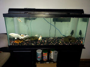 75 Gallon for trade for larger tank *fish are not for sale*