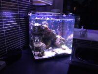55 litre saltwater fish tank salt water aquarium clown fish