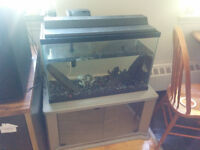 """30 Gal Aquarium with 6"""" Plecko and all accesories"""