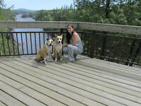 Dog Walking and Pet Sitting Services Available For Essex County