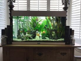 Fish tank and fish complete set up