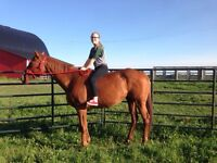 9 year old thoroughbred mare.