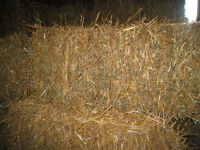 Small square bales Wheat straw