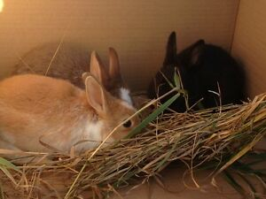 Adorable Rabbits