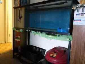 Fish tank stand lid and undergravel filter / Rocks Kitchener / Waterloo Kitchener Area image 2