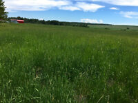 If you need pasture I've got around 80 acres with lots of grass