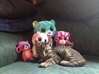 Free adorable kitten, last one