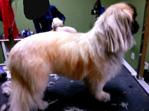 discount dog grooming for your dog