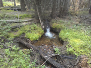 Placer claim on Rice creek, (Rock creek area)