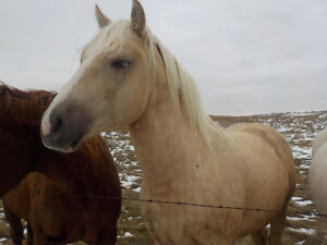 4 horses for rehoming