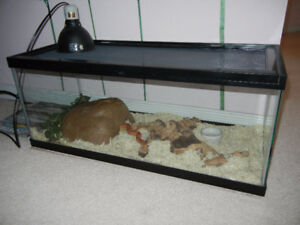 Corn snake with 20 L terrarium and all the accessories.