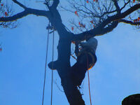 Tree Removal, Pruning,Elevations. Clearing