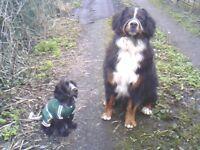 EXPERIENCED, ENVIRONMENTALLY FRIENDLY DOG WALKING