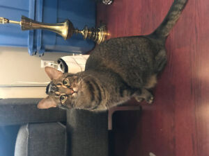 2 Year Old Male Cat For Rehoming - FREE