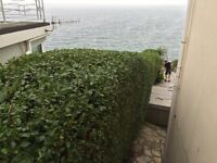 Low Cost, Quality Hedge Cutting & Topiary