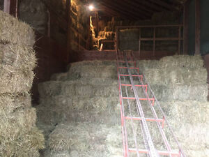 1st Cut Hay Bales For Sale