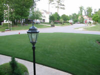 Pure 100% Certified kentucky Bluegrass Sod Installation- GREEN!