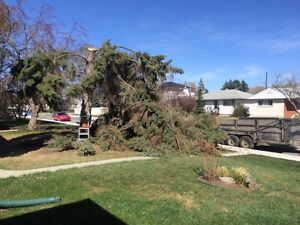 Tree Removal and Skidsteer Services  Edmonton Edmonton Area image 2