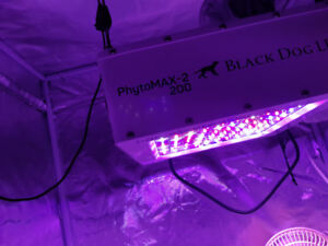 A qui la chance?!magnifique led grow light blackdog usa!