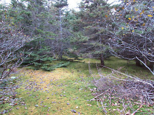 82-94 RIDGE ROAD, CHAPEL'S COVE..2 ACRES St. John's Newfoundland image 6