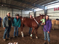 A gift in Emergency Equine First Aid