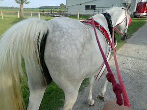Horse riding club, Saddle up Looking for a few good men or women Sarnia Sarnia Area image 9