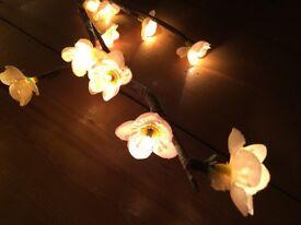 Blossom branch fairy lights