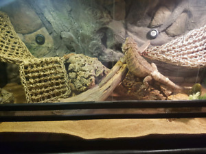 Complete bearded dragon tank with stand