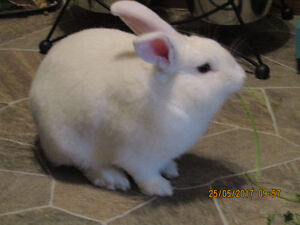 Bunny needs loving home