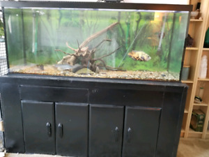 120 Gal fish tank for sale - everything included