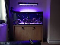 Marine 250ltr tank with Led light and external filter and Aqua medic 1000 skimmer cabinet