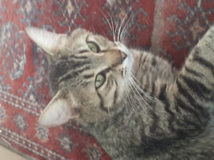 Very affectionate cat needs good home