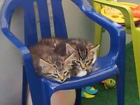 Two Adorable Male Kittens