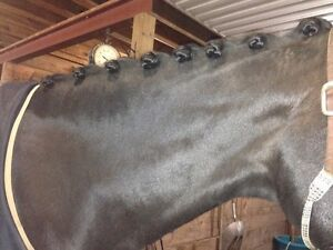 Clipping and Braiding Services  London Ontario image 7