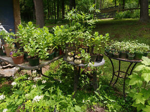 PLANTS..ASSORTED..BIG AND HEALTHY