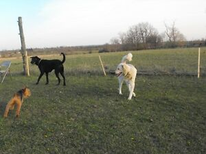 YOUR DOGS ENJOY A 25 ACRE OF FUN Kawartha Lakes Peterborough Area image 4