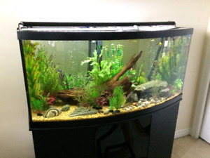 72 Gallon Bow Front Aquarium / Fish Tank w/ Fluval 306 Filters