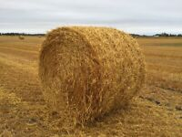 Oats straw bales for sale